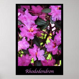 Rododendro Impresiones