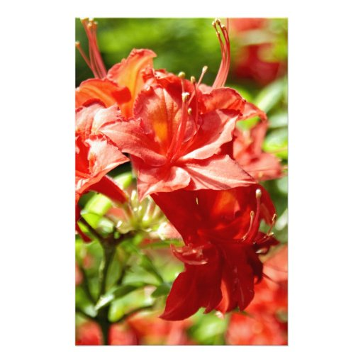 Rododendro Personalized Stationery