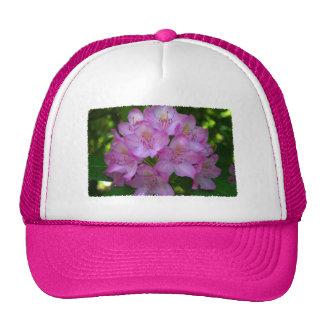 Rododendro púrpura rosáceo Catawbiense Gorro