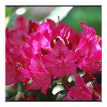 Rododendro rosado bonito comunicados personales