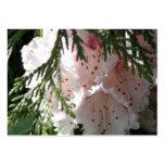 Rododendro y cedro rosados tarjeta de visita
