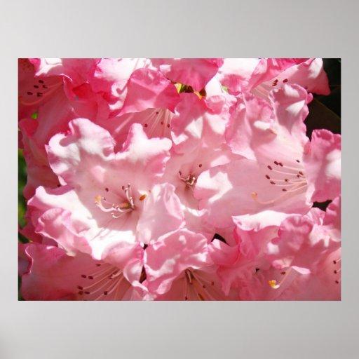 Rododendros brillantes rosados hermosos de las ilu posters
