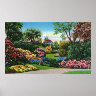 Rododendros de Highland Park en la floración Poster