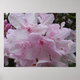 Rododendros del poster