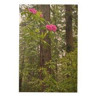 Rododendros que florecen con los árboles de la cuadros de madera