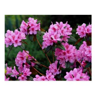 Rododendros, Quebec, Canadá Tarjetas Postales