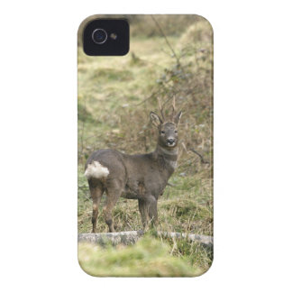 Roe Deer Buck BlackBerry Bold Case-Mate iPhone 4 Cover
