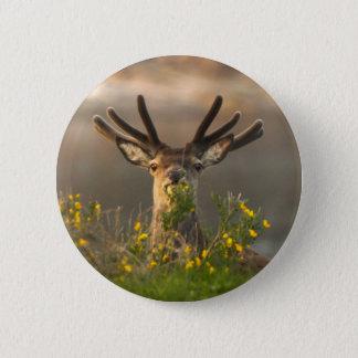 Roe Deer Buck Button Badge