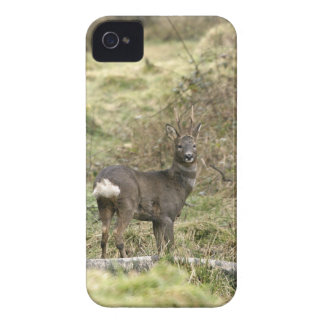 Roe Deer Buck iPhone 4/4S Case-Mate Barely There iPhone 4 Case