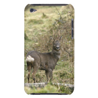 Roe Deer Buck iPod Touch Case-Mate Barely There iPod Touch Case