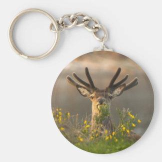 Roe Deer Buck Key Chain