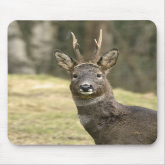 Roe Deer Buck Mousepad