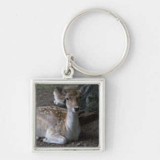 Roe deer keychains