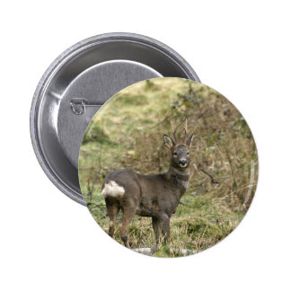 Roe Deer on the Moors Button Badge