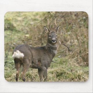 Roe Deer on the Moors Mousepad