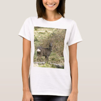 Roe Deer on the Moors Tee Shirt Fitted White