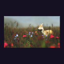 Roe in a Meadow Canvas Print