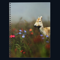 Roe in a Meadow Notebook
