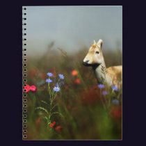 Roe in a Meadow Notebook