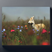 Roe in a Meadow Photo Plaque