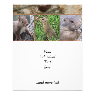 roedores lindos folleto 11,4 x 14,2 cm