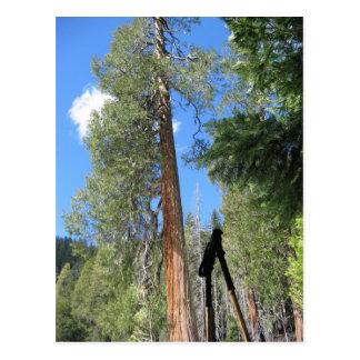 Rogue Umpqua Divide Wilderness Postcard