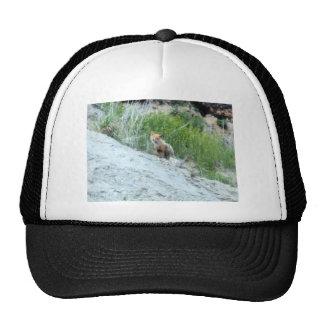 rojo 09 del zorro gorras de camionero