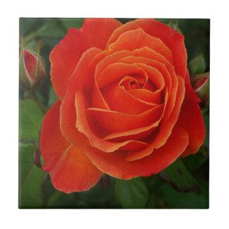 Rojo anaranjado subió floreciente azulejo cuadrado pequeño