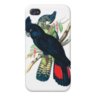 Rojo atado Cockatoos negros de Banksian iPhone 4 Protector
