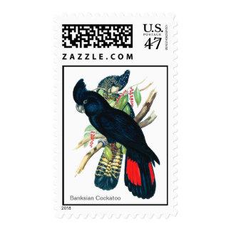 Rojo atado, Cockatoos. negros (de Banksian) Timbre Postal
