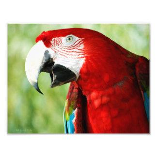 Rojo brillante fotografia