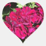 Rojo de la flor del geranio