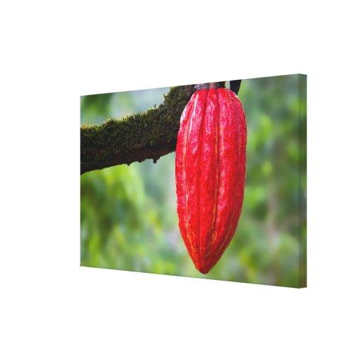 rojo de la vaina del cacao impresion de lienzo