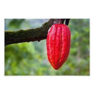 rojo de la vaina del cacao impresión fotográfica