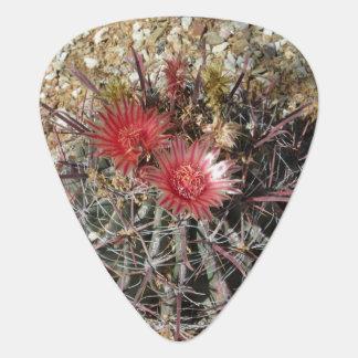 Rojo del anzuelo del cactus de barril plumilla de guitarra