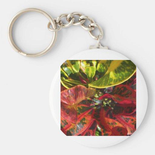 Rojo del Croton Llavero Redondo Tipo Pin