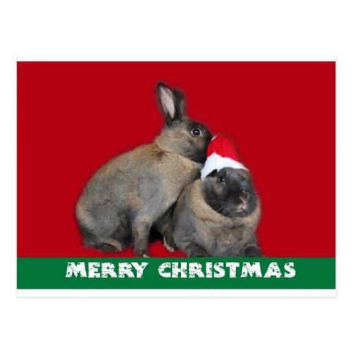 Rojo del gorra de Santa de los conejos de conejito Tarjeta Postal