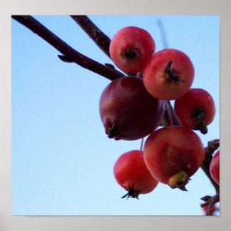 Rojo del invierno impresiones