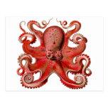 Rojo del pulpo de Haeckel Postal