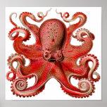 Rojo del pulpo de Haeckel Posters
