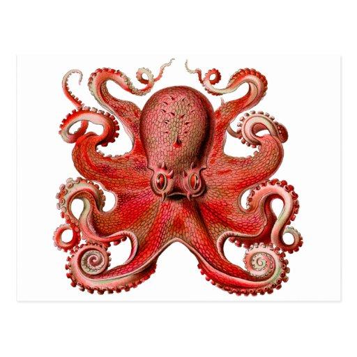 Rojo del pulpo de Haeckel Tarjetas Postales