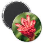 rojo en el jardín imán de frigorifico