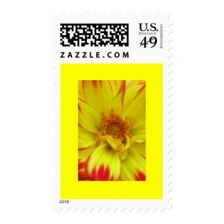 Rojo en la flor amarilla de Dalia Sellos