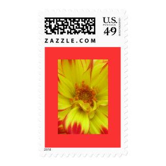 Rojo en la flor amarilla de Dalia Envio
