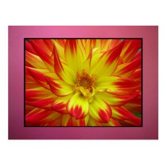 Rojo en la flor amarilla de Dalia Tarjetas Postales