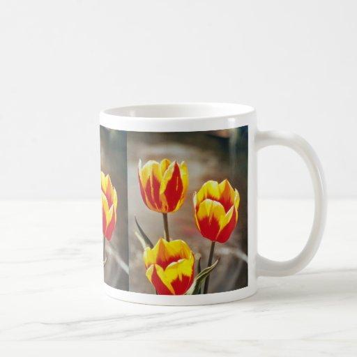 Rojo escoja los tulipanes tempranos, flores de Kei Tazas
