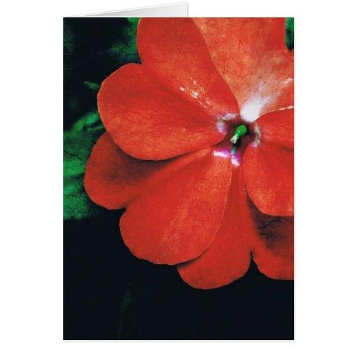 Rojo grande tarjeta de felicitación