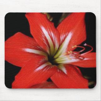 Rojo-lilly, en un mousepad