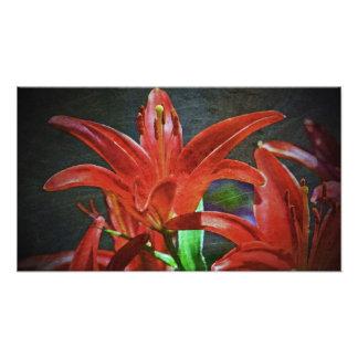 Rojo Lirio-Texturizado Fotografía