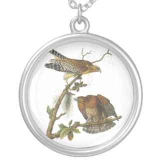 Rojo-llevó a hombros el halcón, Juan Audubon Grímpola